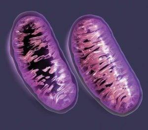 geenien merkitys