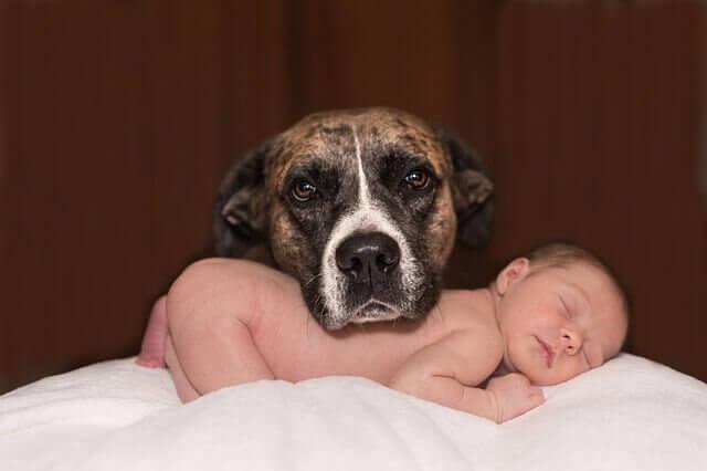 Perheen lemmikin valmistelu vauvan saapumiseen