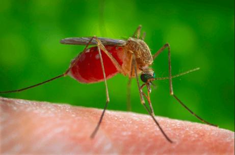 Hyönteisten puremilta ja pistoilta voi välttyä mm. pukeutumalla oikein.
