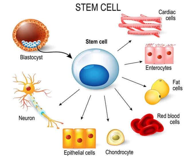 Lapselle on tärkeää opettaa kantasoluista