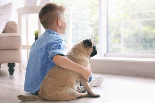 Parhaat pienet koirarodut lapsiperheisiin